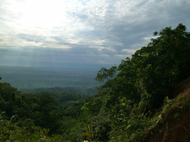 Amazing Rain forest 2